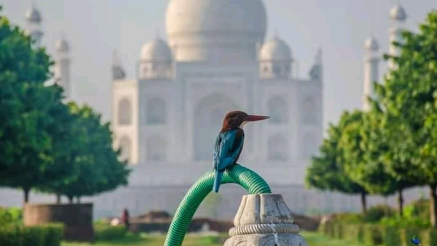 bird at the Taj Mahal