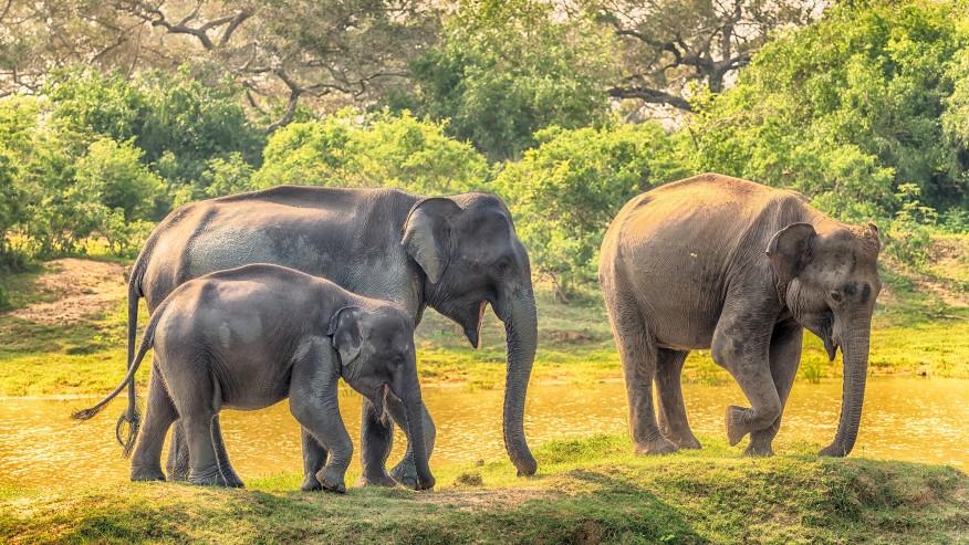 elephants in their natural habitat