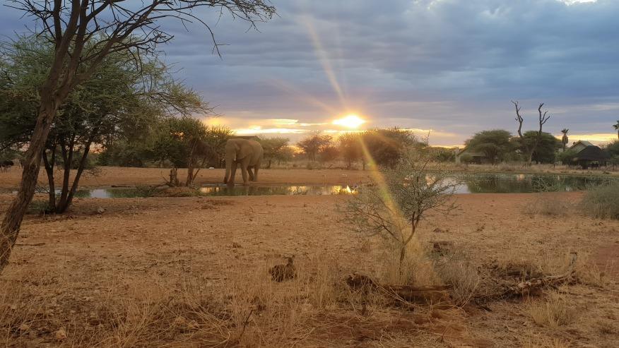 elephant spotting at sunset