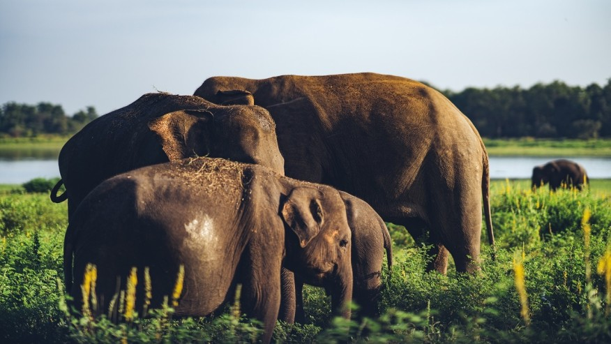 Explore the fertile terrains of Sri Lanka