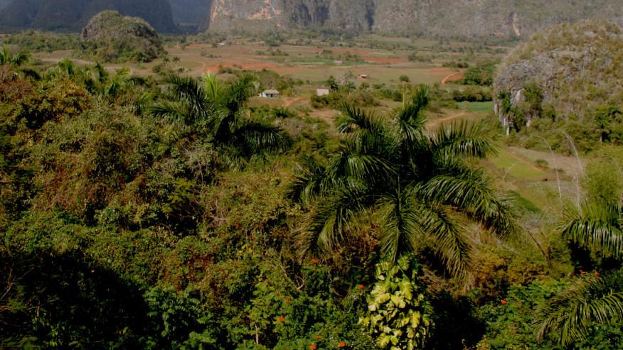 the Viñales Countryside