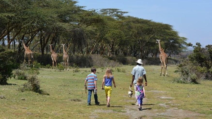 Spot the giraffes