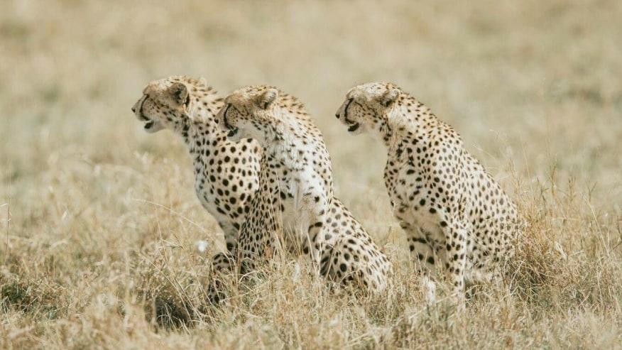 Take adventure safaris in the plains