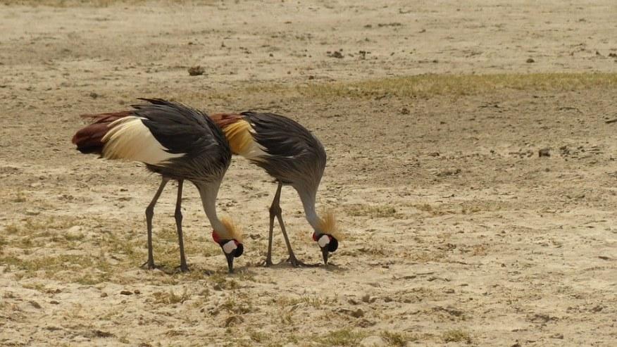 Birding Across Kenya