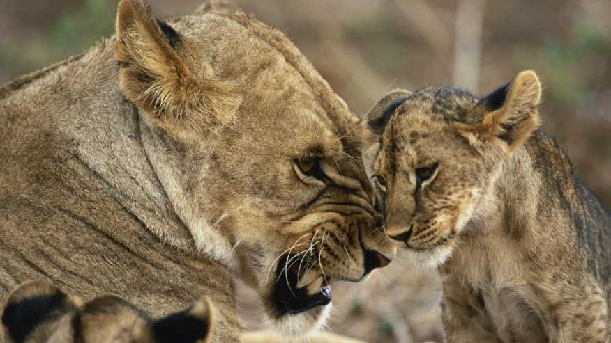 Cub and the mother