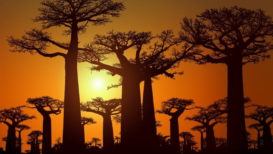 Gorgeous sunset at Allee des Baobabs/Avenue of the Baobabs