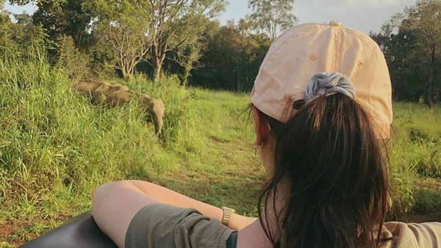spot Asian elephants