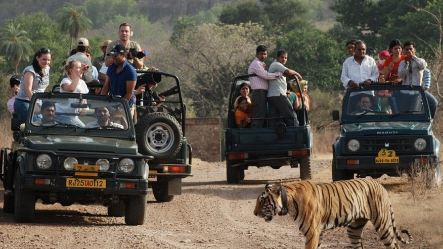 Tiger spotted on a safari