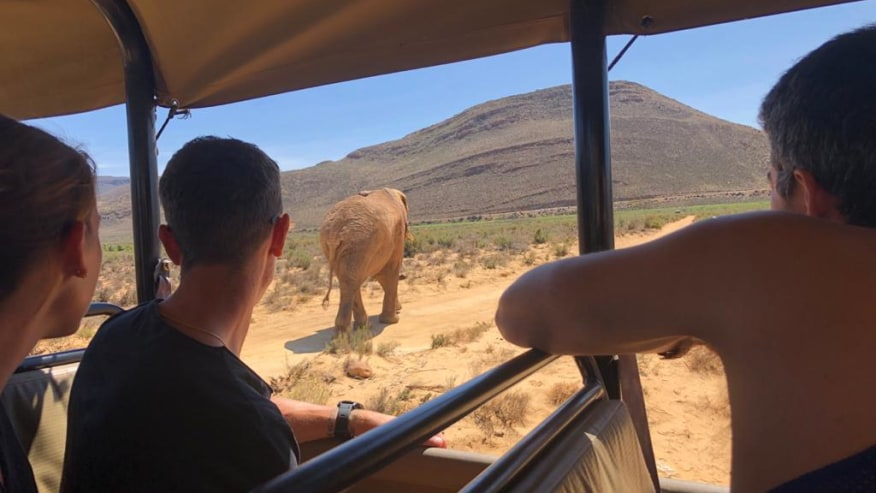 Spot an elephant