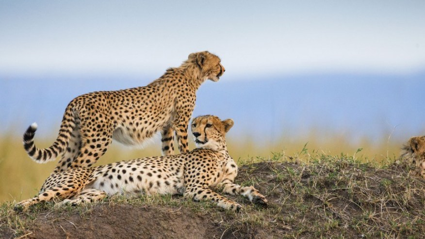 Experience Safari in the Mara - Small Group Camping Tour