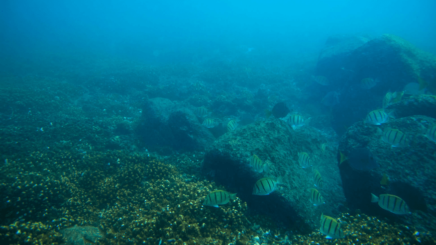 The rocky landscape and the coral reef forms a striking scene under the ocean