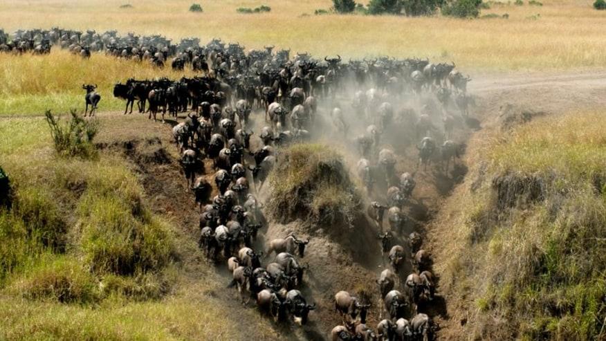 Embark on an adventurous Kenyan Lodge Safari