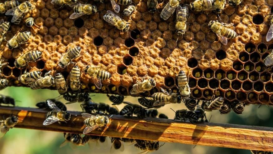 Taste Organic Honey while exploring Ethiopian culture