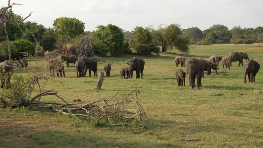 Visit the unique attractions of Sri Lanka