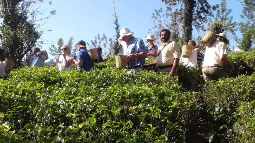 Giragama Tea Gardens