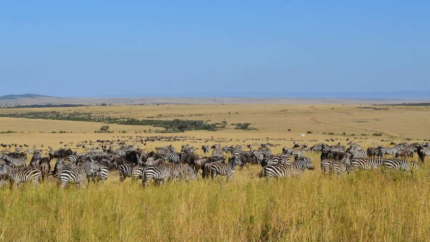 Masai Mara - The Great Migration
