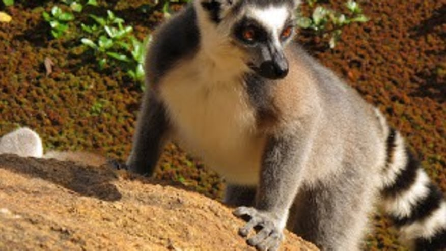 Have a tryst with the Magical Indri