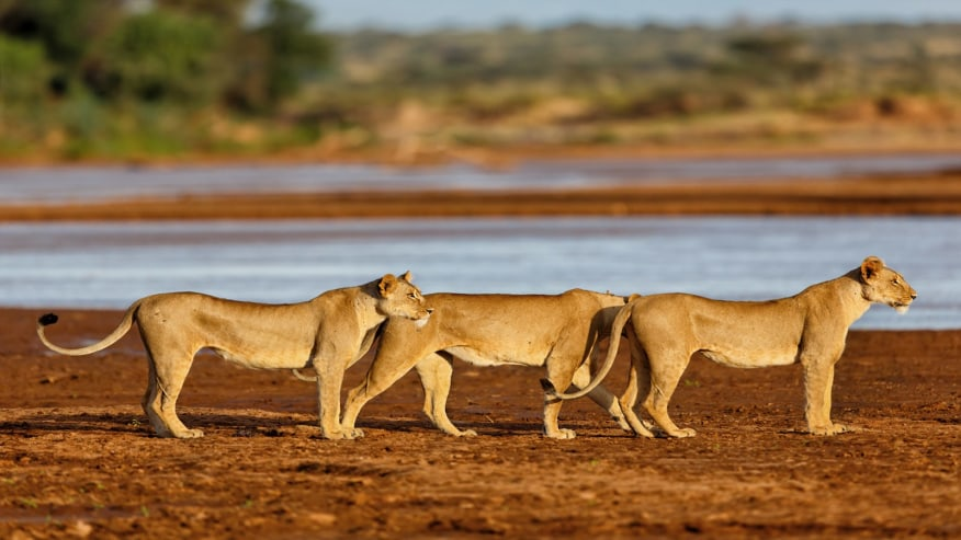 Go on thrilling game drives