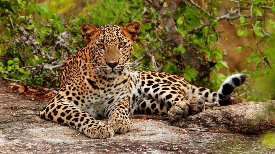 Visit Amazing Sri Lanka: Beach and Wildlife