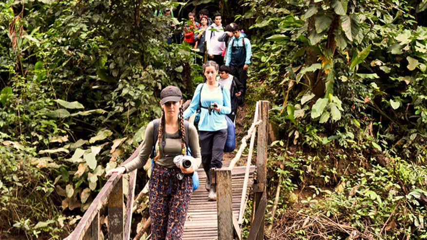 bridge walk in the jungle