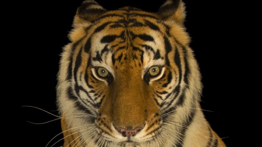 Cherish Wildlife, Waterfalls & Ayurveda Tour of Exotic Central India