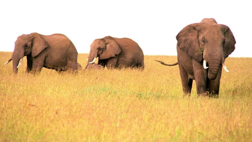 Relish Wildlife Safari to Beach Holiday in One Tour