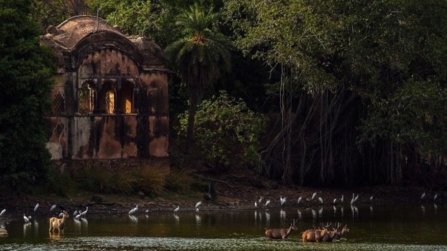 animals gathered around the river
