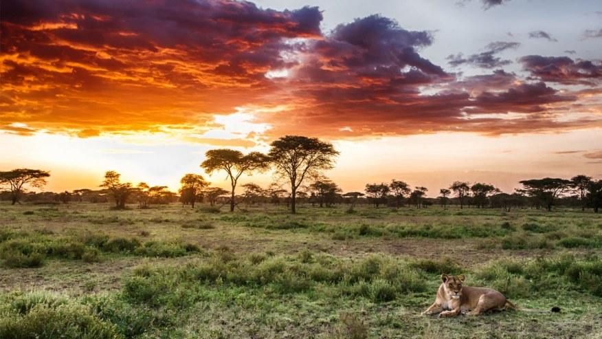 The Great Tanzanian Luxury Safari