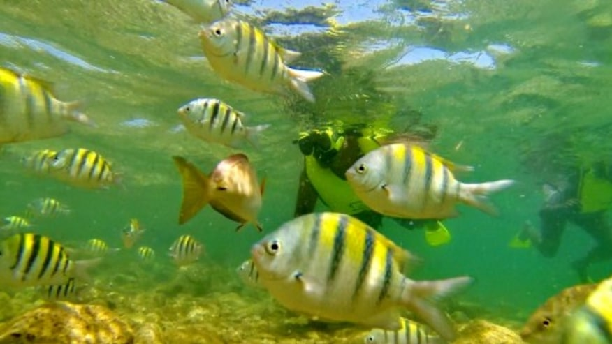 Try Snorkeling at Escambron Beach