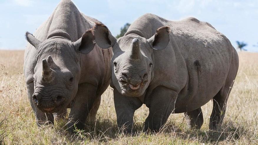 Rhinos sighting