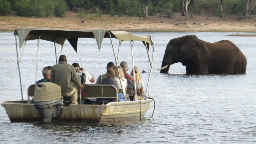 spot an elephant on a boat ride