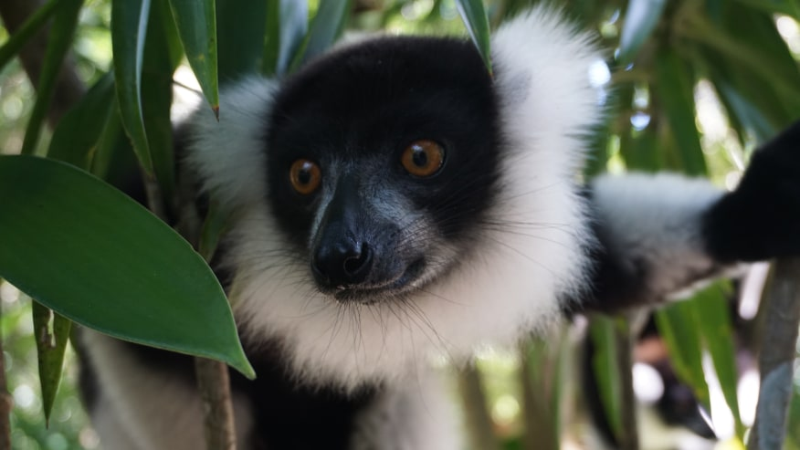 Lemurs in the National Park.