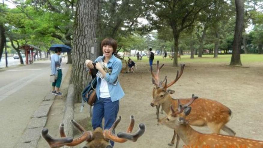 Wild animals in Nara Park