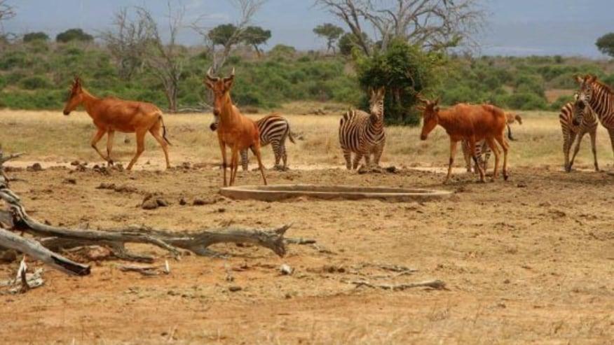 animals in Tsavo park