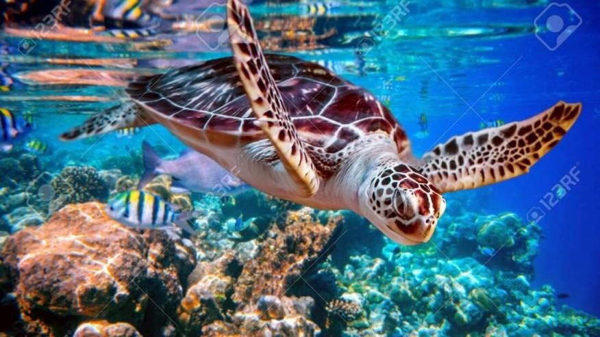 soft adventure in the Maldives