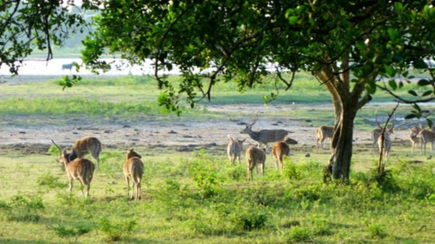 herds of deer