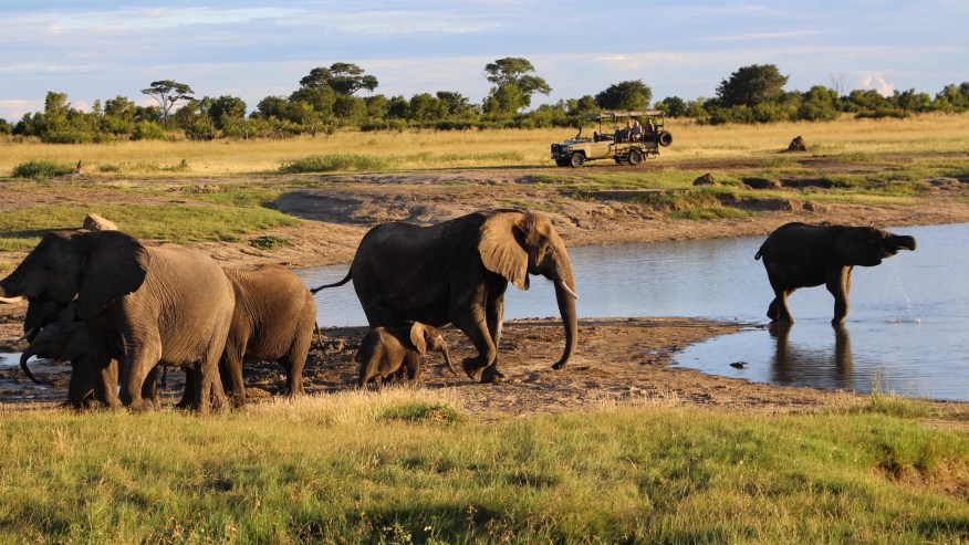 Get Up Close With Nature In West Zimbabwe.