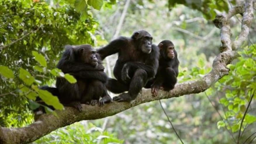 monkeys on the trees