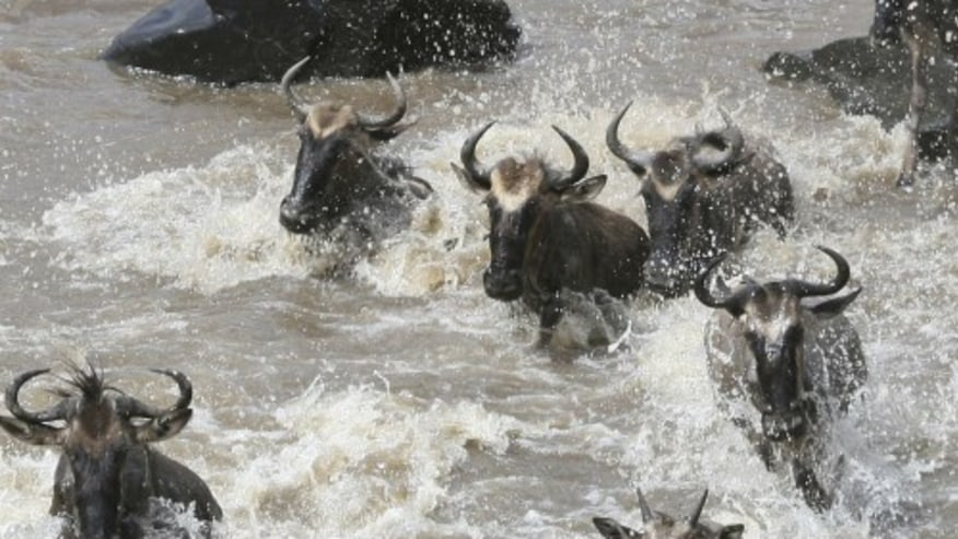 Thrill with a Classic Safari Tour