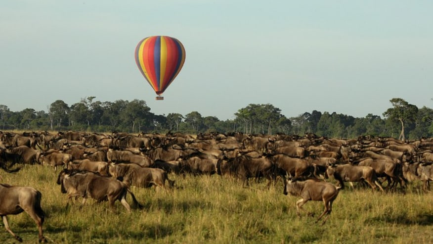 Fly over the wildebeests in a hot air balloon