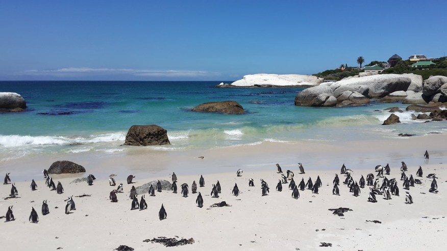 Be endeared by Cape Peninsula