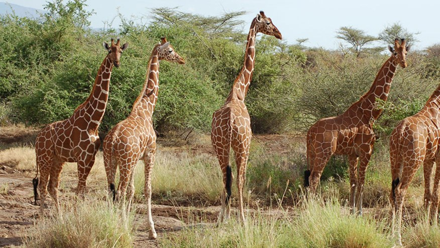 Check this Northern Kenyan Reserve Off Your List
