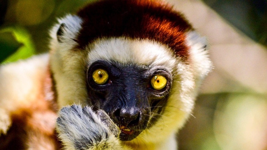See Madagascar Up-Close on This All Inclusive Tour