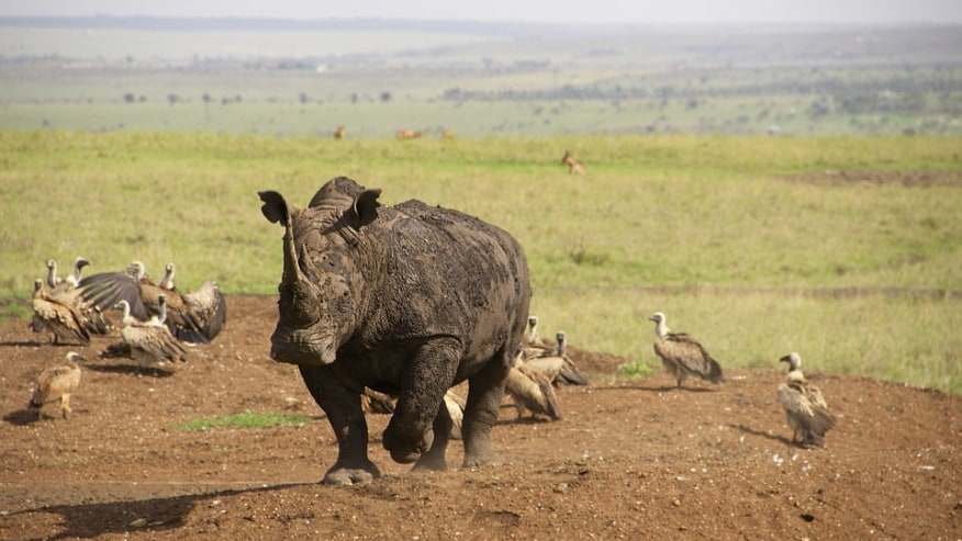 Spot the Residents of 2 Rift Valley Lakes