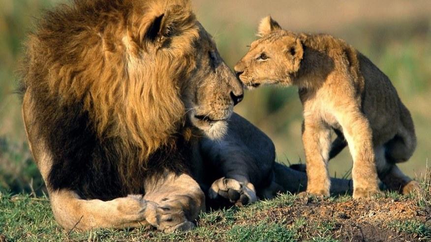 Meet Big 5 in a Roaring Game Reserve