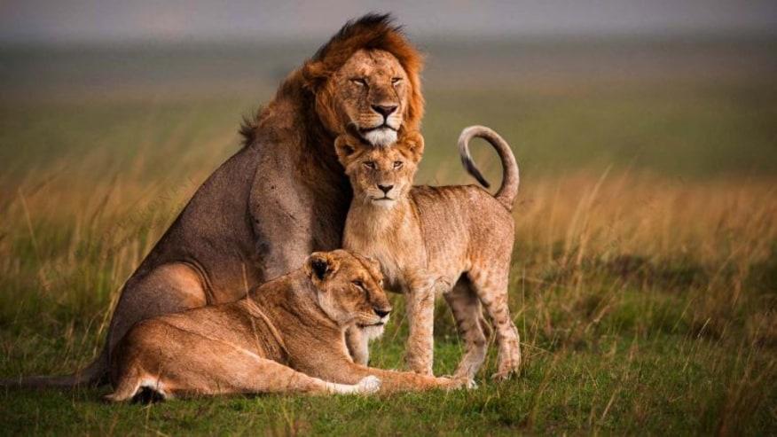 Discover Kenyan Wildlife