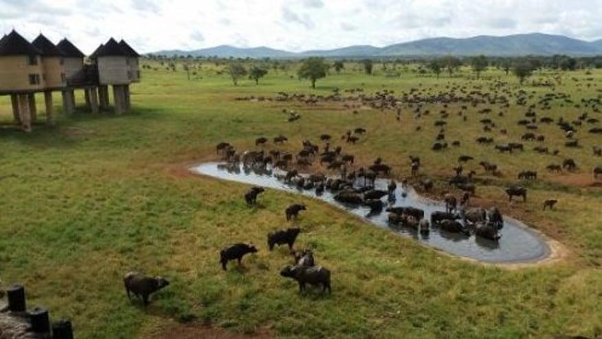 herd of animals grazing