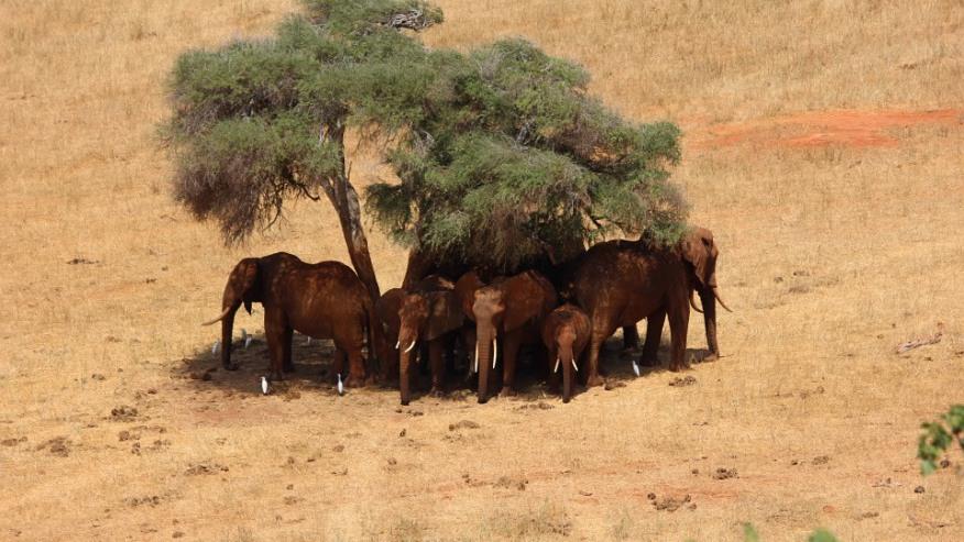 Herd of elephants taking shade