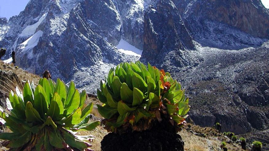 Mount Kenya adventure technical climbing tour