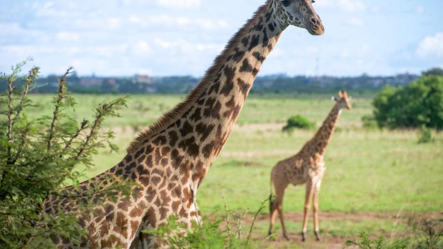Book a Weekend Safari in Salt Lick